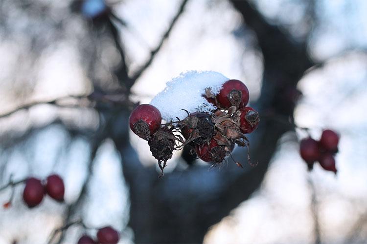 kardiaserena-winterwonderland-austrianblogger-viennablogger-plussizeblogger-donaustadt-schneelandschaft-gefrorene-blumen