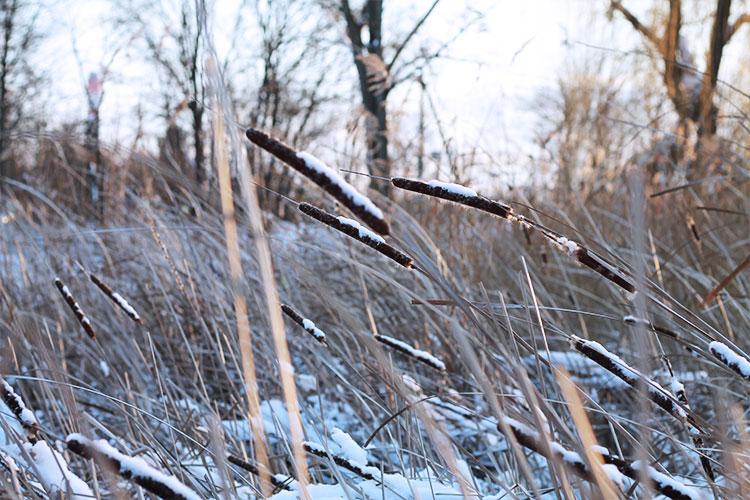 kardiaserena-winterwonderland-austrianblogger-viennablogger-plussizeblogger-donaustadt-schneelandschaft-schilf