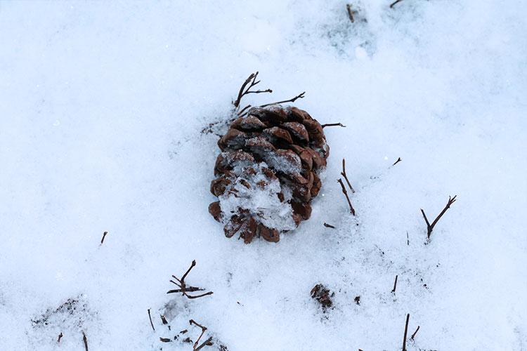 kardiaserena-winterwonderland-austrianblogger-viennablogger-plussizeblogger-donaustadt-schneelandschaft-schnee-tannenzapfen