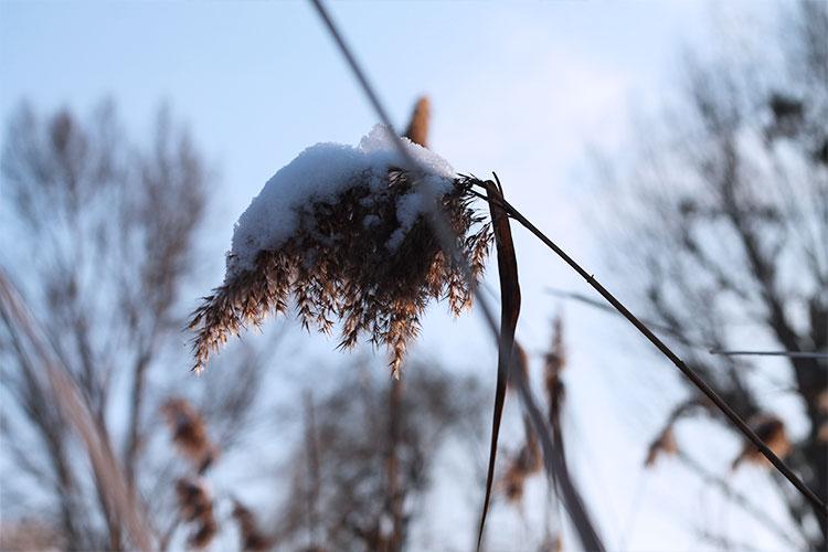 kardiaserena-winterwonderland-austrianblogger-viennablogger-plussizeblogger-donaustadt-schneelandschaft-winterlandschaft-schilf