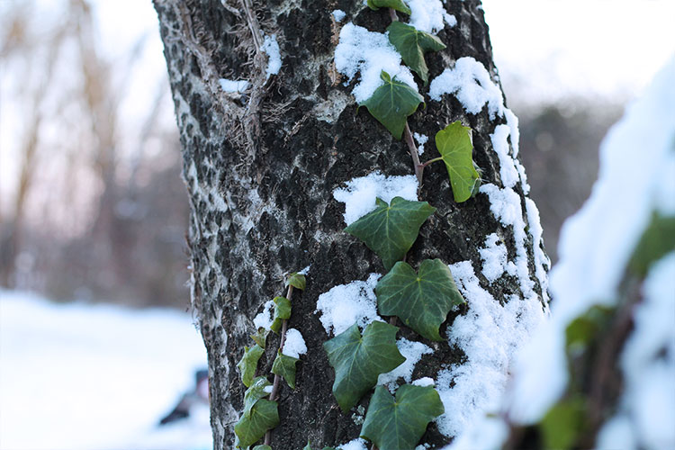 kardiaserena-winterwonderland-austrianblogger-viennablogger-plussizeblogger-donaustadt-schneelandschaft-winterlandschaft