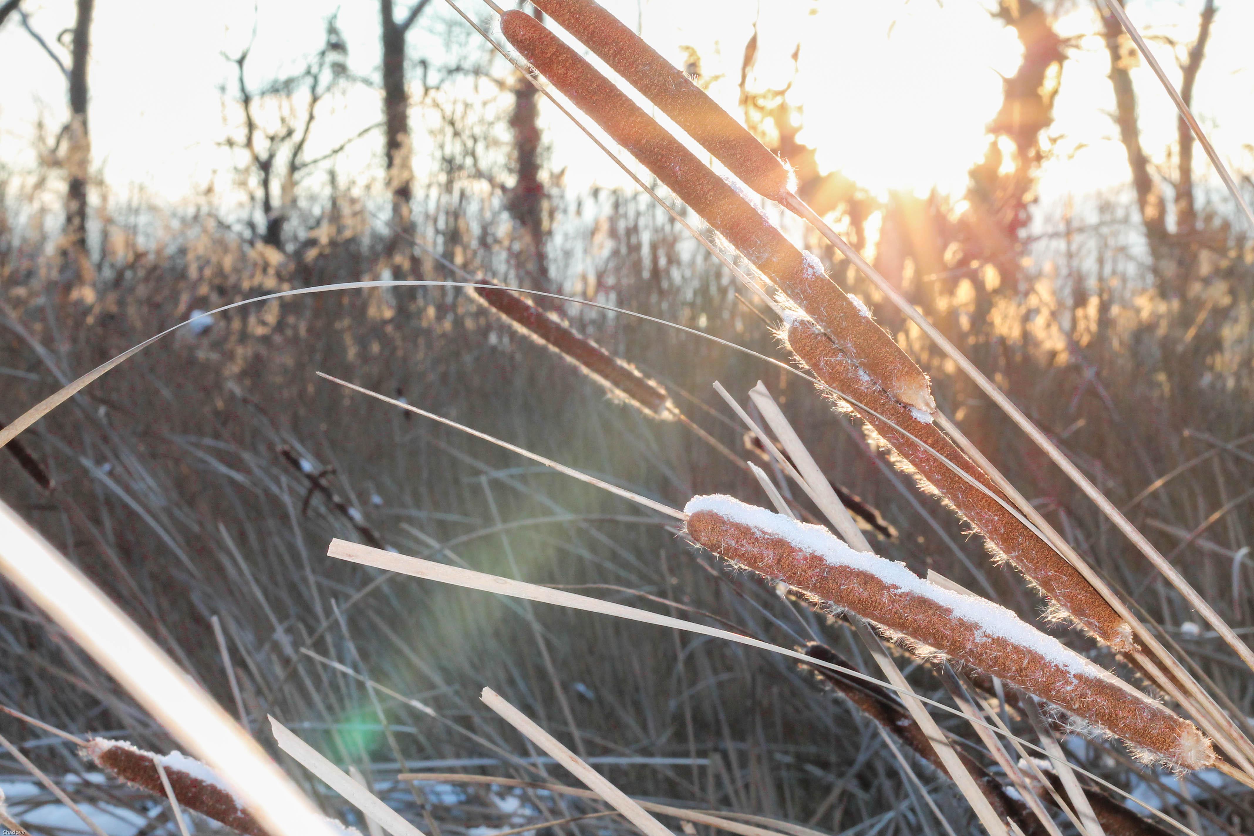 xmas wishlist kardiaserena winterwonderland (2)